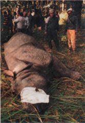 Rhino Surgery